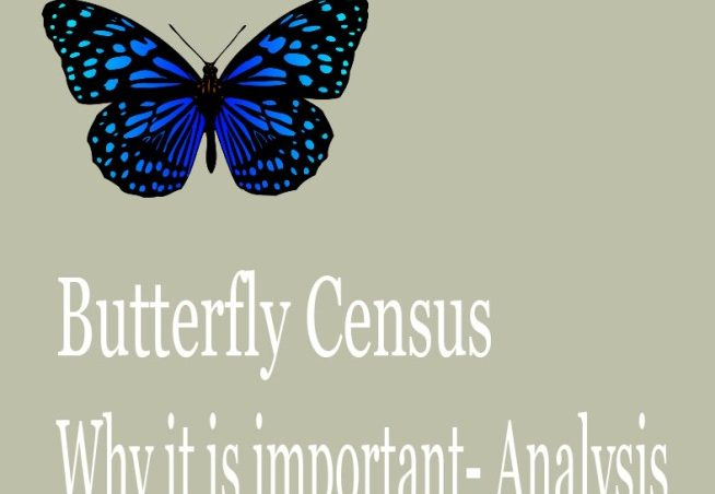 Butterfly life span and concern
